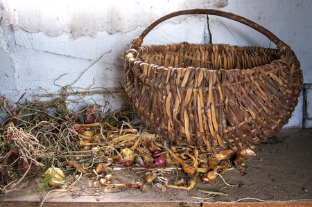 Wicker basket and dried onions. Rustic vintage still life.