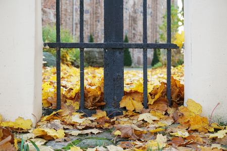 Autumn background. Yellow maple leaves lying on the ground near a metal gate.