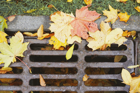 Fragment of street drainage. Metal sewer grate for the collection of water with yellow maple leaves. Lizenzfreie Bilder