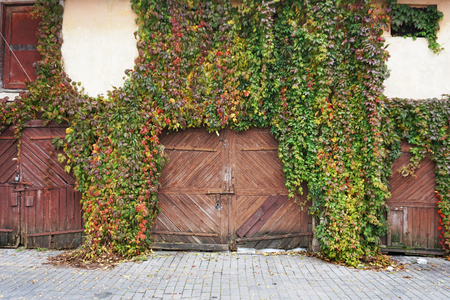 The facade of an old house with a wooden gate, overgrown with red and green ivy.