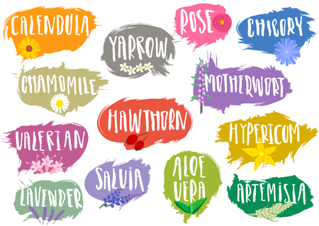 A Vector set of trendy emblems, tags for medicinal herbs. Various natural herbal additives for drinks, soap, shampoo, pharmacy products with handwritten annotation and sketches of plants.