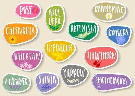 Set of trendy paper stickers for medicinal herbs illustration Illustration