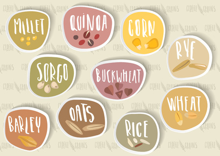 Different types of cereal grain illustration