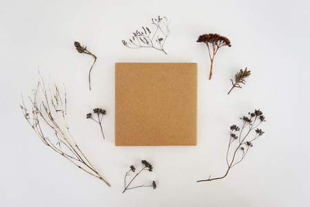 Beige square box and lots of dried herbs on a white background. Empty space, mock up. Stock Photo