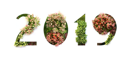 2019 New Year concept. Numbers overgrown with green and red flowers.