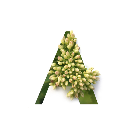 Cut out letter A with growing plant inside. Part of the alphabet.