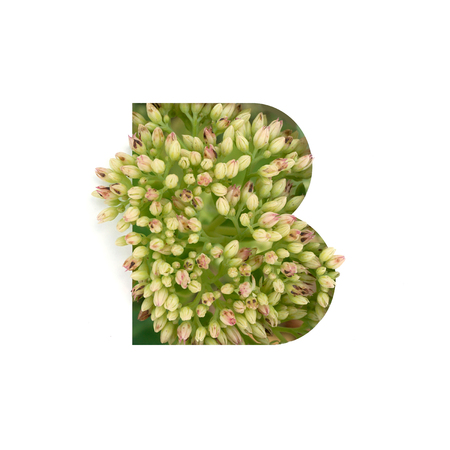 Cut out letter B with growing plant inside. Part of the alphabet.