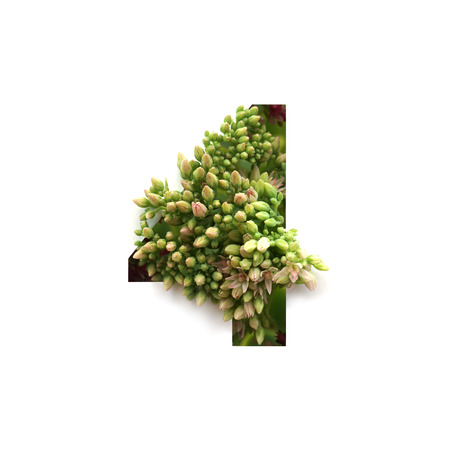 Cut out number 4 (four) with growing plant inside. Part of the alphabet.