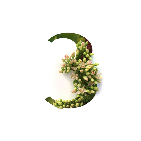 Cut out number 3 (three) with growing plant inside. Part of the alphabet. Stock Photo