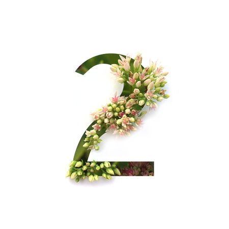 Cut out number 2 (two) with growing plant inside. Part of the alphabet. Stock Photo