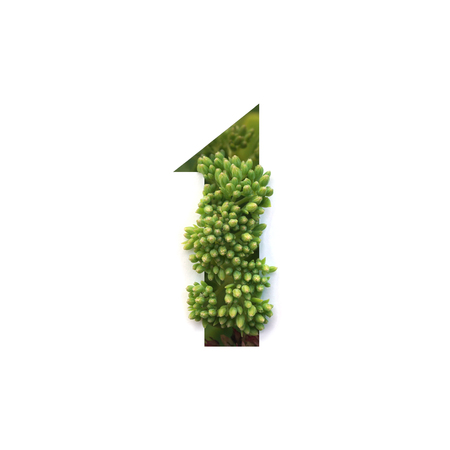 Cut out number 1 (one) with growing plant inside. Part of the alphabet.