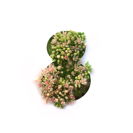 Cut out number 8 (eight) with growing plant inside. Part of the alphabet. Stock Photo