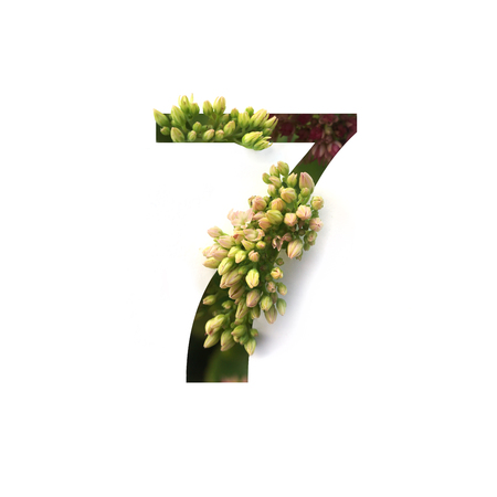 Cut out number 7 (seven) with growing plant inside. Part of the alphabet.