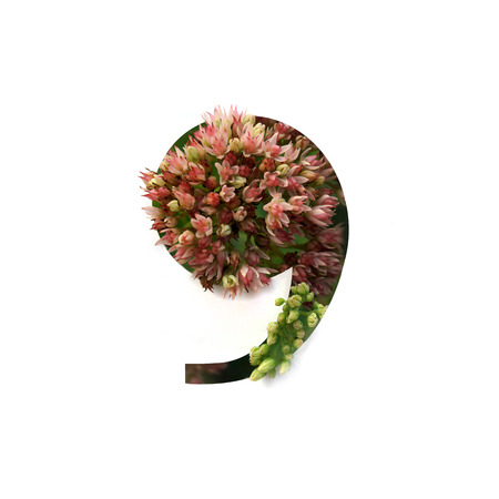 Cut out number 9 (nine) with growing plant inside. Part of the alphabet. Stock Photo