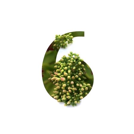 Cut out number 6 (six) with growing plant inside. Part of the alphabet.