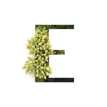 Cut out letter E with growing plant inside. Part of the alphabet.