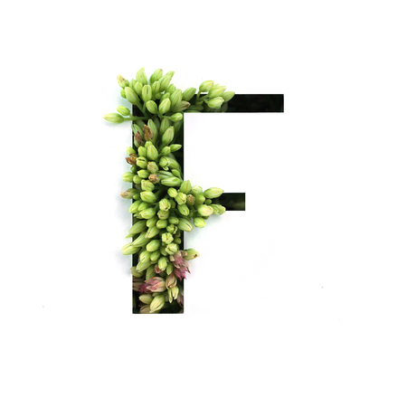 Cut out letter F with growing plant inside. Part of the alphabet.