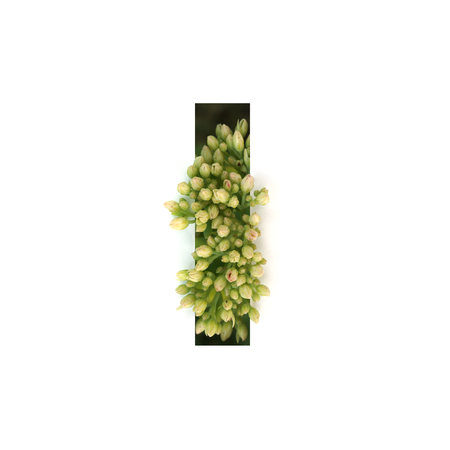 Cut out letter I with growing plant inside. Part of the alphabet. Stock Photo