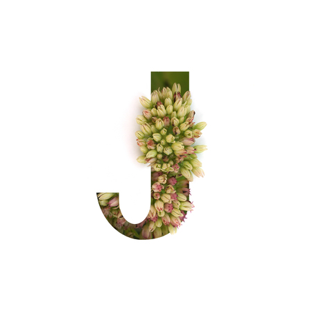 Cut out letter J with growing plant inside. Part of the alphabet.