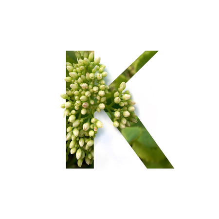 Cut out letter K with growing plant inside. Part of the alphabet.