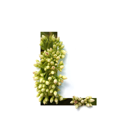 Cut out letter L with growing plant inside. Part of the alphabet.