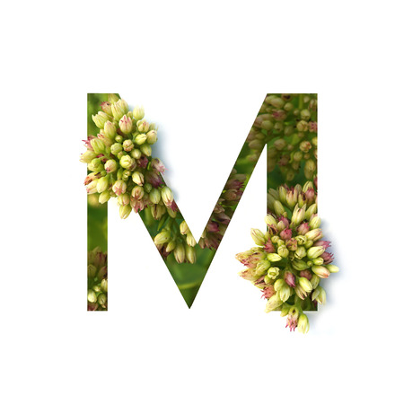 Cut out letter M with growing plant inside. Part of the alphabet.