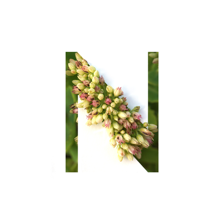 Cut out letter N with growing plant inside. Part of the alphabet.