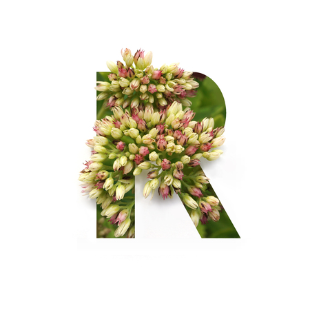 Cut out letter R with growing plant inside. Part of the alphabet.