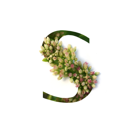 Cut out letter S with growing plant inside. Part of the alphabet.