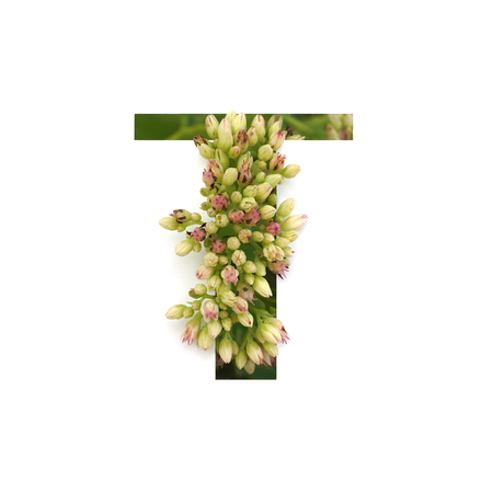 Cut out letter T with growing plant inside. Part of the alphabet.