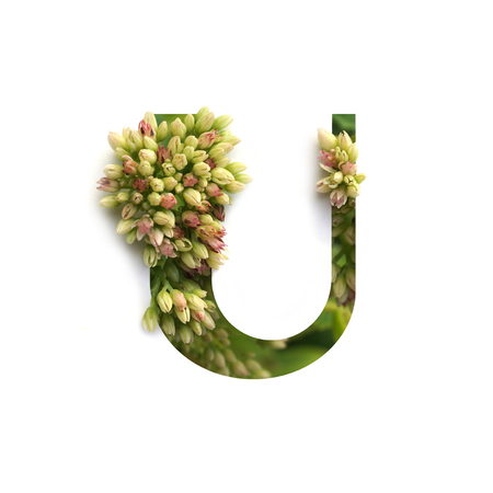 Cut out letter U with growing plant inside. Part of the alphabet.