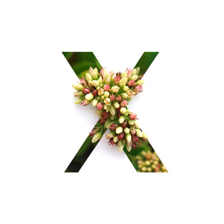 Cut out letter X with growing plant inside. Part of the alphabet. Stock Photo