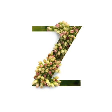 Cut out letter Z with growing plant inside. Part of the alphabet.