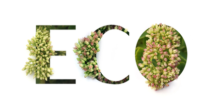 Cut out word ECO with growing plant inside. Spring and Bio concept.