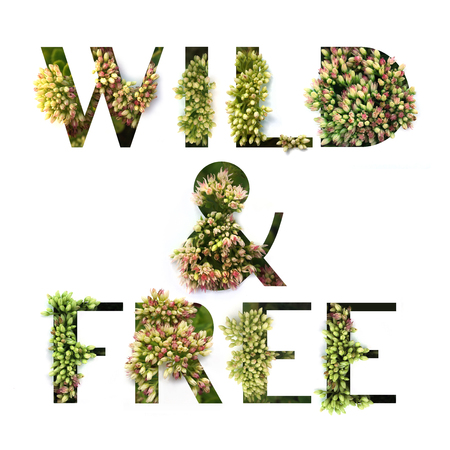Cutout quote Wild and Free with growing plant inside. Poster concept. Stock fotó
