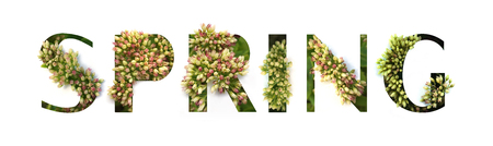 Cutout lettering Spring with growing plant inside Stock fotó