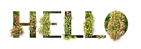 Cutout word Hello with growing plant inside. Spring and Bio concept.