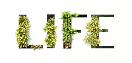 Cut out word LIFE with growing plant inside. Organic production concept.