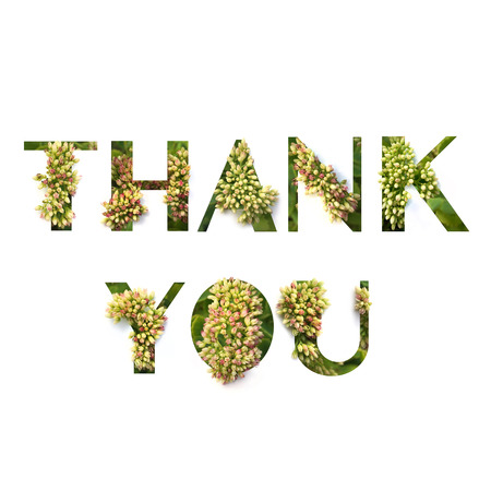 Cut out word Thank You with growing plant inside.