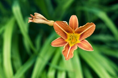 a single orange flower on green  Stock Photo - 5158694