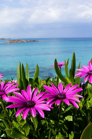 Purple wild flowers on beach Stock Photo - 9625099