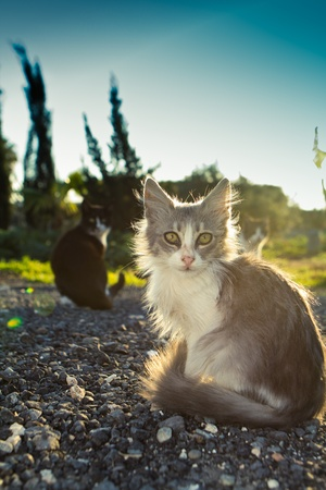 Little kitty with green sad eyes and blac cat on the background sunset  Stock Photo - 9625071