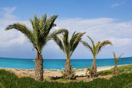 Resort palms on the beach in Aya Napa  Stock Photo - 9625123