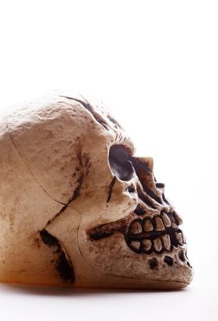 sideways: Closeup profile of a fake human skull on a white background