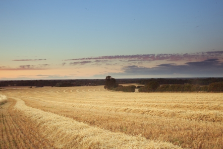 Wheat field at summer. Sunset in the summer uk Stock Photo - 21783525