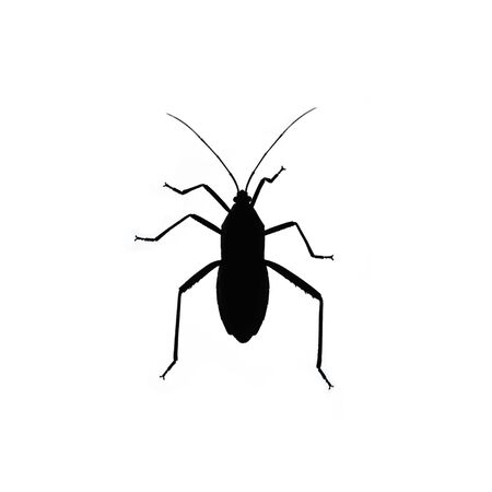 stag beetle: Black bug isolated on white background. Insect silhouette