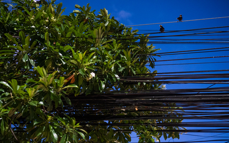 electric power: Electrical cables and wires with two sitting birds and green tree leaves over evening sky Stock Photo
