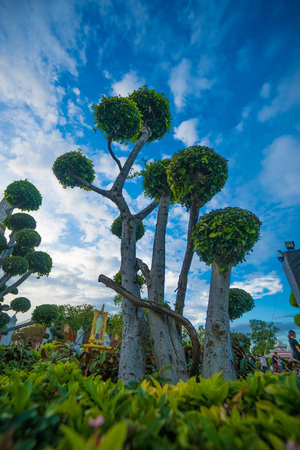 Green bonsai trees gardens in Wat Arun, Bangkok, Thailand