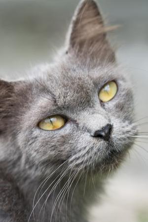 Closeup of beautiful gray cat outdoors Stock Photo