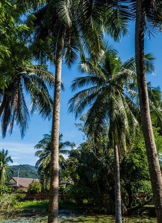 pozo de agua: View of palm trees and dense tropical vegetation growing around small pond